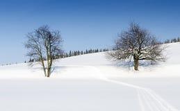 在冬天横向的结构树 图库摄影