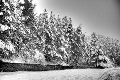 在冬天横向的结构树 库存照片