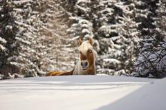 在冬天横向的马 免版税库存图片