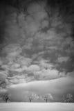 在冬天横向的结构树 免版税图库摄影