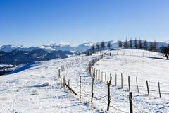 在冬天横向的结构树 库存图片