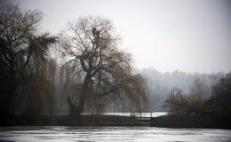 在冬天池塘的岸的一棵老杨柳 库存图片