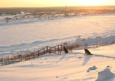 在冬天河河岸的两条狗  免版税库存图片