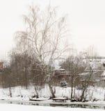 在冬天河河岸,下降的大桦树向河 免版税图库摄影