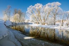 在冬天河的积雪的树 库存图片