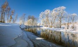 在冬天河的积雪的树 图库摄影
