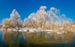 在冬天河的积雪的树 库存照片
