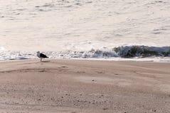 在冬天海滩的一只海鸥 免版税库存图片