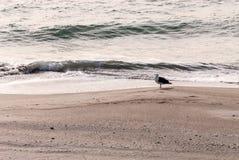 在冬天海滩的一只海鸥 免版税库存照片