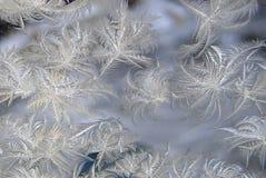 在冬天窗口的冷淡的自然样式 库存图片