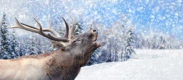 在冬天背景的鹿 图库摄影