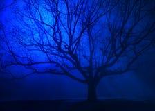 在冬天蓝色雾的超现实的树 库存照片