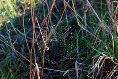 在冬天蜘蛛网的雨下落 库存照片