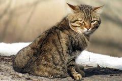 在冬天街道上的街道猫 库存图片