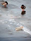 在冬天设置的塑料污染 库存照片