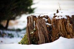 在冬天降雪的天,在雪下的日志期间砍树并且下雪 美丽的概念礼服女孩纵向佩带的空白冬天 免版税库存图片