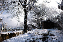 在冬天雪的庭院树 免版税库存照片