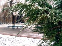 在冬天雪的杜松 免版税库存图片