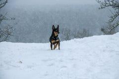 在冬天雪的狗 文本的空间 库存照片