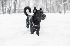 在冬天雪的狗 免版税库存图片