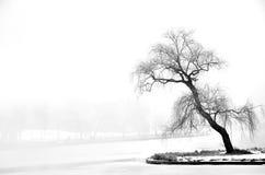 在冬天霜的偏僻的树 免版税图库摄影