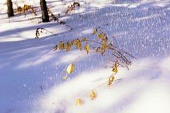 在冬天领域的干燥草甸花 背景蓝色云彩调遣草绿色本质天空空白小束 斯诺伊领域和植物 植物结冰 免版税库存图片