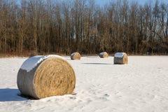 在冬天领域的干草捆 免版税图库摄影