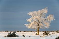在冬天风景的大孑然榆树 免版税库存图片
