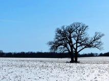 在冬天风景的孤立树剪影 免版税库存图片