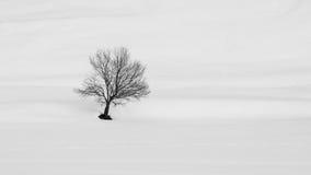 在冬天风景的孤零零树 免版税库存图片