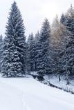 在冬天风景的小河 库存照片
