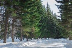 在冬天风景的积雪的路 库存照片