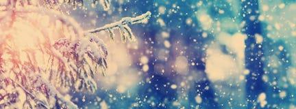 在冬天风景的美丽的树在晚上 免版税库存图片
