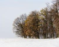 在冬天风景的落叶树 库存图片