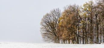 在冬天风景的落叶树 免版税库存图片