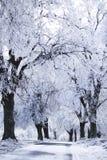 在冬天风景的路 库存图片