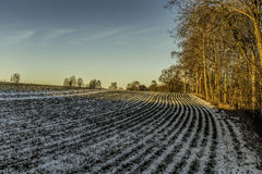 在冬天风景的阳光 库存图片