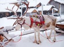 在冬天风景的驯鹿 库存图片