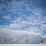 在冬天风景14的树 免版税库存照片