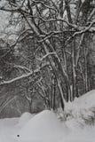 在冬天风暴以后 库存图片