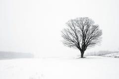 在冬天飞雪的孤立树 免版税库存照片