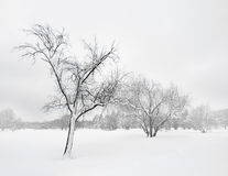 在冬天飞雪的结构树 免版税库存图片