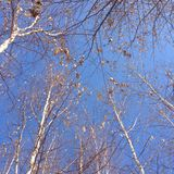 在冬天,剩余的叶子挥动 免版税库存图片