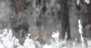 在冬天,在降雪的森林冬时的雪下降 雪花慢慢地落 暴雪风暴冬天场面背景 锡 股票视频