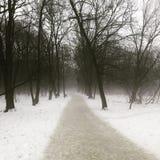 在冬天misted的森林 免版税库存照片