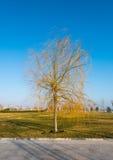 在冬季期间,没有叶子的一棵树 免版税库存照片