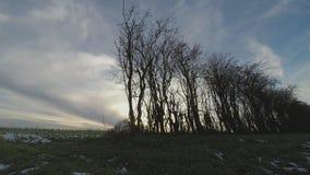 在冬时流逝的杨柳灌木 股票视频