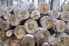 在冬时的树桩。 库存照片