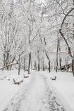 在冬时的用白色雪报道的树,分支和冰,有长凳的室外公园 免版税库存照片