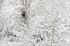 在冬时的用白色雪报道的树,分支和冰 免版税库存图片